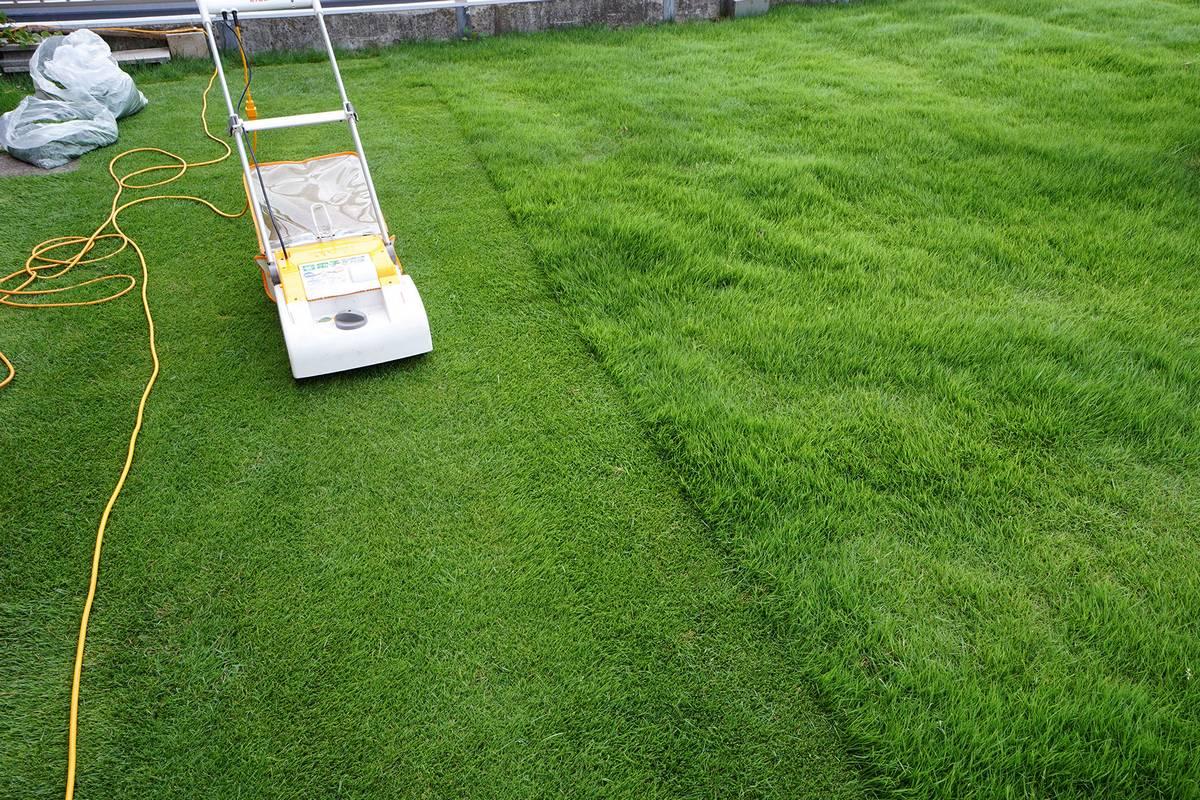初夏の芝刈り