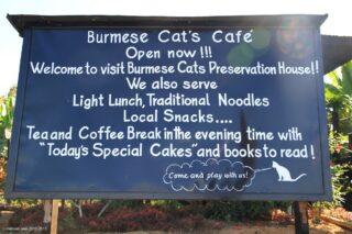 Burmese Cat's Cafe
