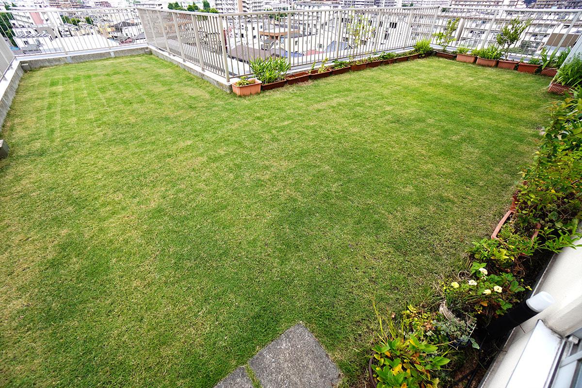 最初の芝刈り